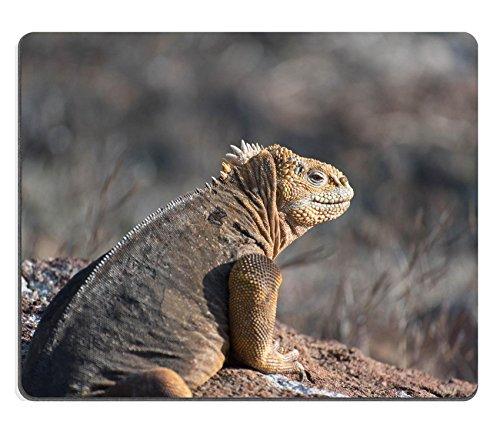 luxlady-mousepad-mariquita-come-pulgones-natural-rubber-material-image-24852803195