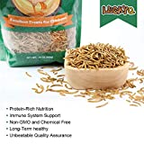 LUCKYQ High-Protein Dried Mealworms 1Lb for