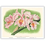 Cattleya Orchid - Cattleya Mossiae var. Bousiesiana - Vintage Botanical Illustration by Jean Jules Linden c.1888 - Master Art Print - 9in x 12in