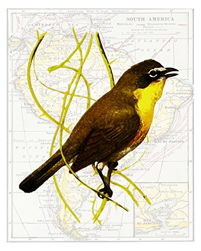 Original Audubon Artwork - 7
