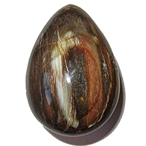 "Satin Crystals Petrified Wood Egg 3.5"" Collectible Authentic Brown Orange Tree Stone Ancient Rock Madagascar C03"