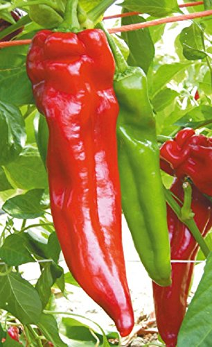 Hot Pepper Hybrid (David's Garden Seeds Pepper Hot Mattadores GC3771 (Red) 25 Non-GMO, Hybrid Seeds)