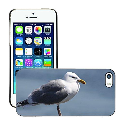 Stampato Modelli Hard plastica Custodie indietro Case Cover pelle protettiva Per // M00421586 Mouette Oiseau Beach Ocean eau Gull // Apple iPhone 5 5S 5G