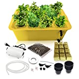 SavvyGrow DWC Hydroponics Growing System-Kit - Medium Size w/Airstone, 11 Plant Sites (Holes) Bucket, Air Pump, Rockwool - Best Indoor Herb Garden for Lettuce, Mint, Parsley - Grow Fast at Home