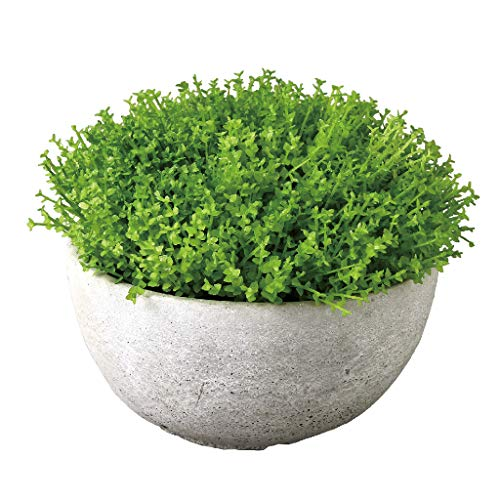 Time Concept Imitation Baby Tears in Cement Bowl Pot - Large - Artificial Plant, Indoor & Outdoor Display, Home & Garden Decor
