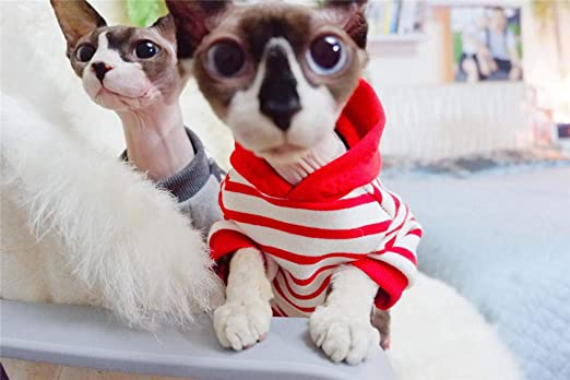 HCYD Ropa de Gato a Rayas Rojas Ropa de Gato esfinge de otoño, XS, Rojo: Amazon.es: Productos para mascotas