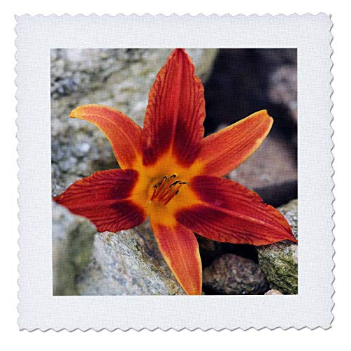 Flora Floral Comforter - 3dRose Stamp City - flowers - Macro photograph of an orange tiger lily laying on some bounders. - 6x6 inch quilt square (qs_316765_2)
