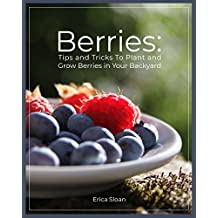 Berries: Tips and Tricks To Plant and Grow Berries in Your Backyard