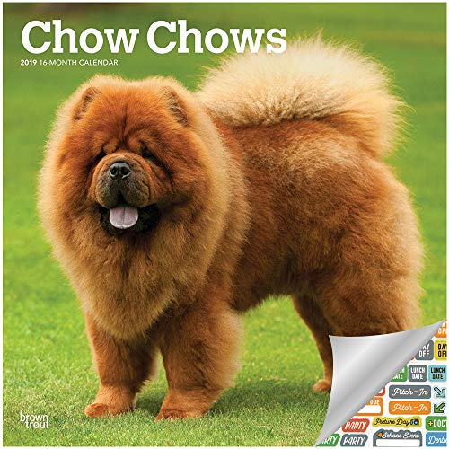 Chow Chow Calendar 2019 Set - Deluxe 2019 Chow Chow Wall Calendar with Over 100 Calendar Stickers (Chow Chows Merchandise)