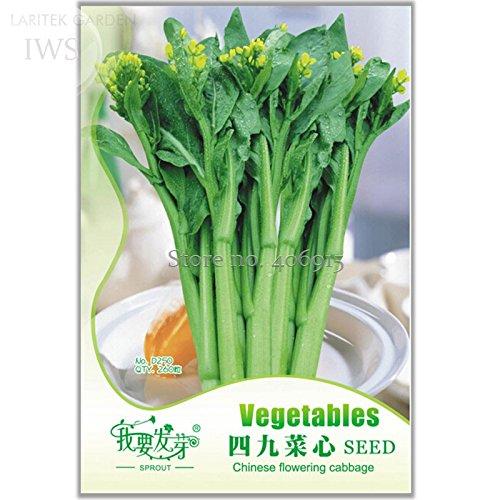 Cabbage Sweet - 2018 Hot Sale!! Sweet and Tender Choy Sum Organic Cabbage Seeds, Original Pack, 260 Seeds, Green Healthy Organic Vegetable Seeds IWSD250