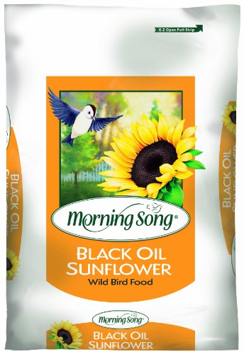 Morning Song 11410 Black Oil Sunflower Wild Bird Food, 50-Pound