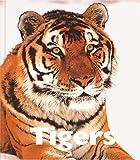 Tigers, Jenny Markert, 1567663974