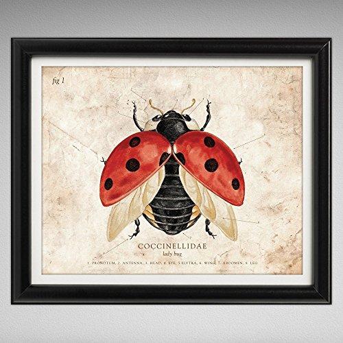 lady-bug-vintage-style-scientific-illustration-8x10