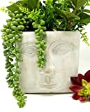 Flower Pot 6 Inch Modern Cement Square Indoor Outdoor Planter Face Pot for Home or Office | Great for Herbs, Annuals, Houseplants, and More