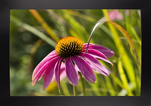 "Frame USA Pink Umbrella-CHRMOY114576 Print 24""x36"" by Chris"