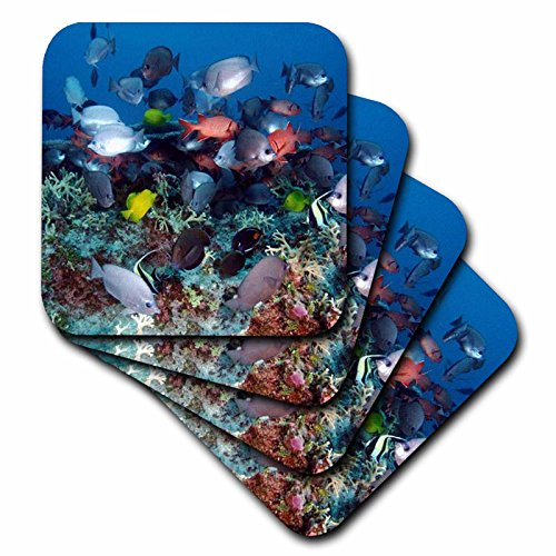 3dRose Tropical Coral Reef Fish - Ceramic Tile Coasters, set of 4 (cst_44933_3)