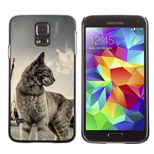 [Neutron-Star] Snap-on Series Coque de protection rigide Cas Case pour Samsung Galaxy S5 [Cat Shorthair Maison Pet Bleu Gris Cute Kitten]