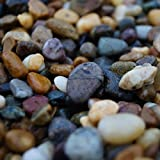 RockinNature 28-50mm Medium Irish Beach Pebbles 20kg decorative garden stone