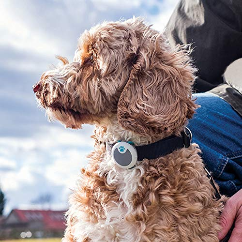 SureFlap Animo - Dog Behavior Monitor and Activity Tracker; (Bluetooth not GPS Location Tracker); Free of Monthly Fees; Free App