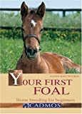 Your First Foal: Horse Breeding for Beginners