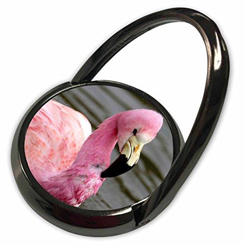 3dRose Danita Delimont - Tropical Birds - Andean Flamingo, Tropical Bird, England - EU33 POX0010 - Pete Oxford - Phone Ring (Andean Flamingo)