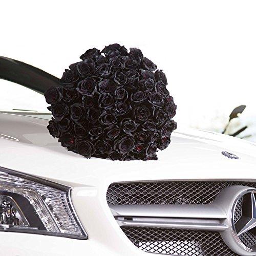 FRESH Black Roses| 25 stems Magnaflor - XXLBlooms| Bunch| 10