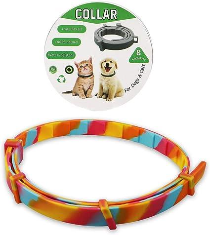 8 mesi di protezione collare regolabile miglior trattamento di controllo pulci per gattini cani Canghai collare antipulci e zecche per cani e gatti