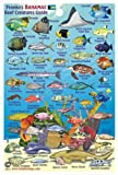 "Bahamas Reef Creatures Identification Guide Franko Maps Laminated Fish Card 4""x6"""