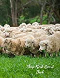 img - for Sheep Flock Record Book: Sheep Record book / textbook / text book