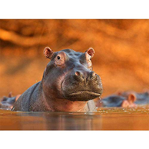 - Diamond Painting Full Drill 5D DIY Rhinestone Embroidery Kit for Home Wall Decor Big Hippo