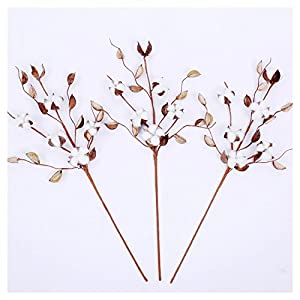 """Cotton Stems - 24""""-30"""" Tall - Cotton Buds/Bolls Farmhouse Style Natural Real Elastic Cotton Stalk Rustic Floral Display Filler Wedding Centerpiece for Home Wall Or Table Decor 2"""