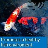 API POND ECOFIX SLUDGE DESTROYER Pond Cleaner And