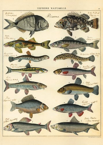 Poster of Natural History Of Fish Vintage Art Picture
