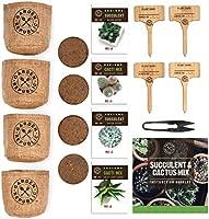 Cactus Kit de semillas de suculentas para principiantes - Kit de ...