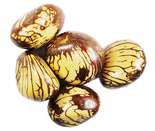 Large Polished Tagua Nuts, Bark Half On, 40-50 mm, set of ()