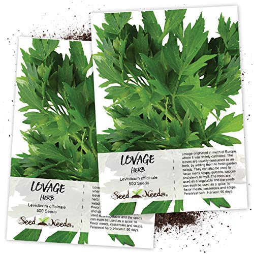 Seed Needs, Lovage Herb (Levisticum officinale) Twin Pack of 500 Seeds Each ()