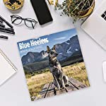 2020 Blue Heelers Wall Calendar by Bright Day, 16 Month 12 x 12 Inch, Cute Dogs Puppy Animals Australian Cattle Canine ACD Queensland Heeler 10