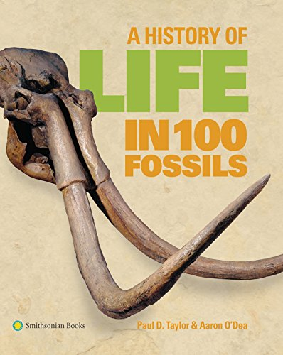 100 Fossils ()