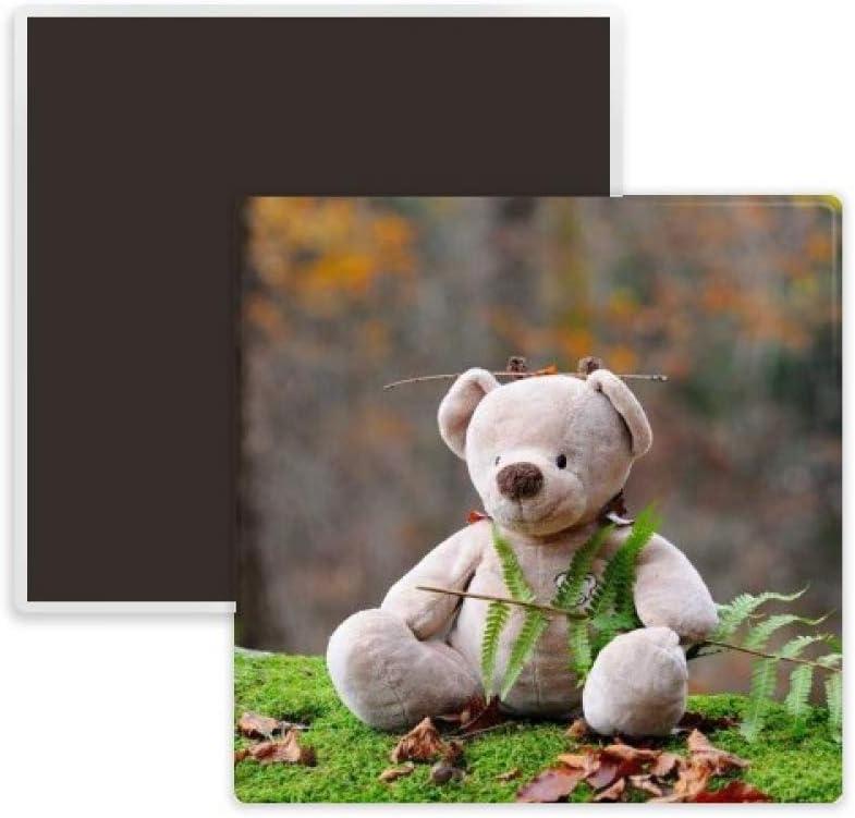 Teddy Bear Forestry Science Nature Square Ceramics Fridge Magnet Keepsake Memento