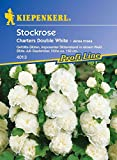 Stockrosen Chaters Double White von Kiepenkerl