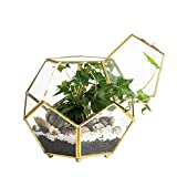 Cheap NCYP Close Footed Gold Copper Brass Glass Geometric Terrarium with Door Pentagon Ball Shape Close Fern Moss Succulent Planter Pot Display Case Box 5.9inches (No Plants)