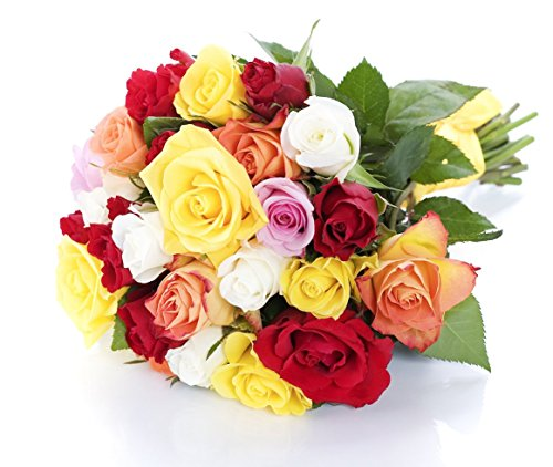 Send Flowers- 25 Long Stem Roses Rainbow Bouquet- No Vase by BloomsyBox