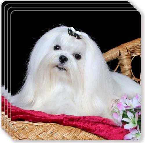 Maltese Coaster (Canine Designs Maltese Rubber Coasters Set of 4)