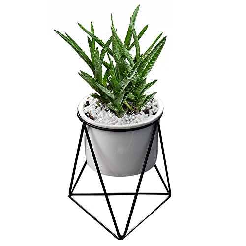 Y&M Planter Pots Indoor, (TM) 6 inch Modern Garden White Ceramic Round Bowl with Metal Air Plant Stand for Succulent Planter Cactus (White + Black)