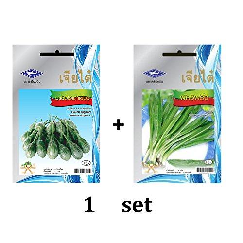 (Love wood Round Eggplant (Khai Tao Kheaw) Seeds and Pasley seed 1 sets From Chai Tai,)