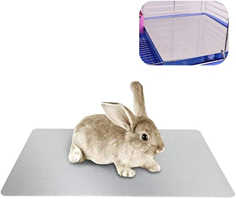 2 pack BUNNY COIN CHEWS