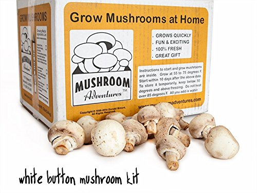 Seasonal White Button Mushroom Growing Kit