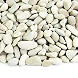 Polished Pebbles | 5 Pounds of Natural, Decorative Stones | Hand-Picked, Premium Pebbles for Aquariums, Terrariums, Fish Tanks and Gardens | Polynesian White, 3/8 Inch – 5/8 Inch Review