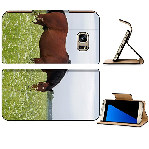 Liili Premium Samsung Galaxy S7 EDGE Flip Pu Leather Wallet Case ID: 29218295 A bay horse grazes on the green field with camomiles
