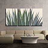 """wall26 3 Piece Canvas Wall Art - Cactus Detail - Modern Home Decor Stretched and Framed Ready to Hang - 24""""x36""""x3 Panels"""